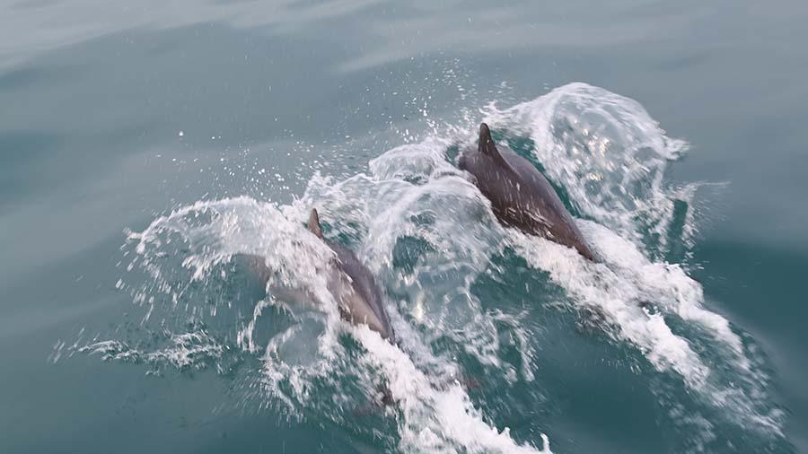 delfini_xilmare_2 (1)