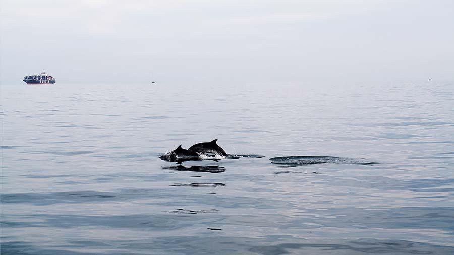 delfini_xilmare_3