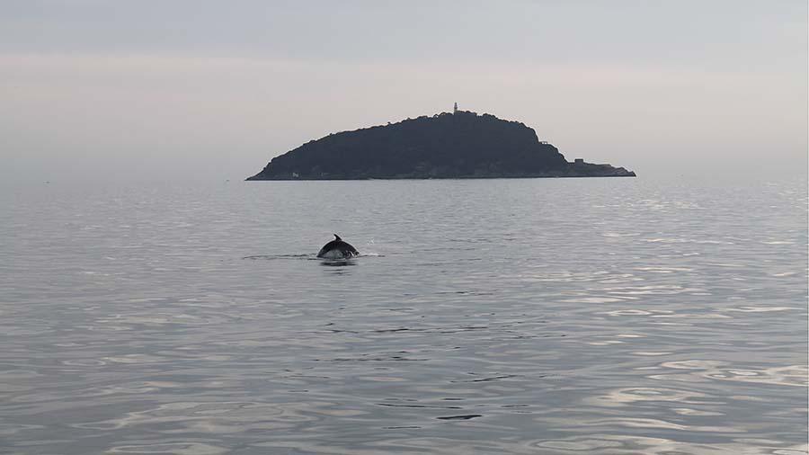 delfini_xilmare_4 (1)