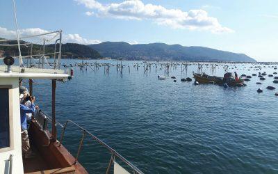 Il nostro territorio ed i prodotti tipici locali: i mitili della Spezia